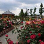 P20170526_hadanoshiculturepark_rose