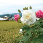 POST20190920_suifuyo_b